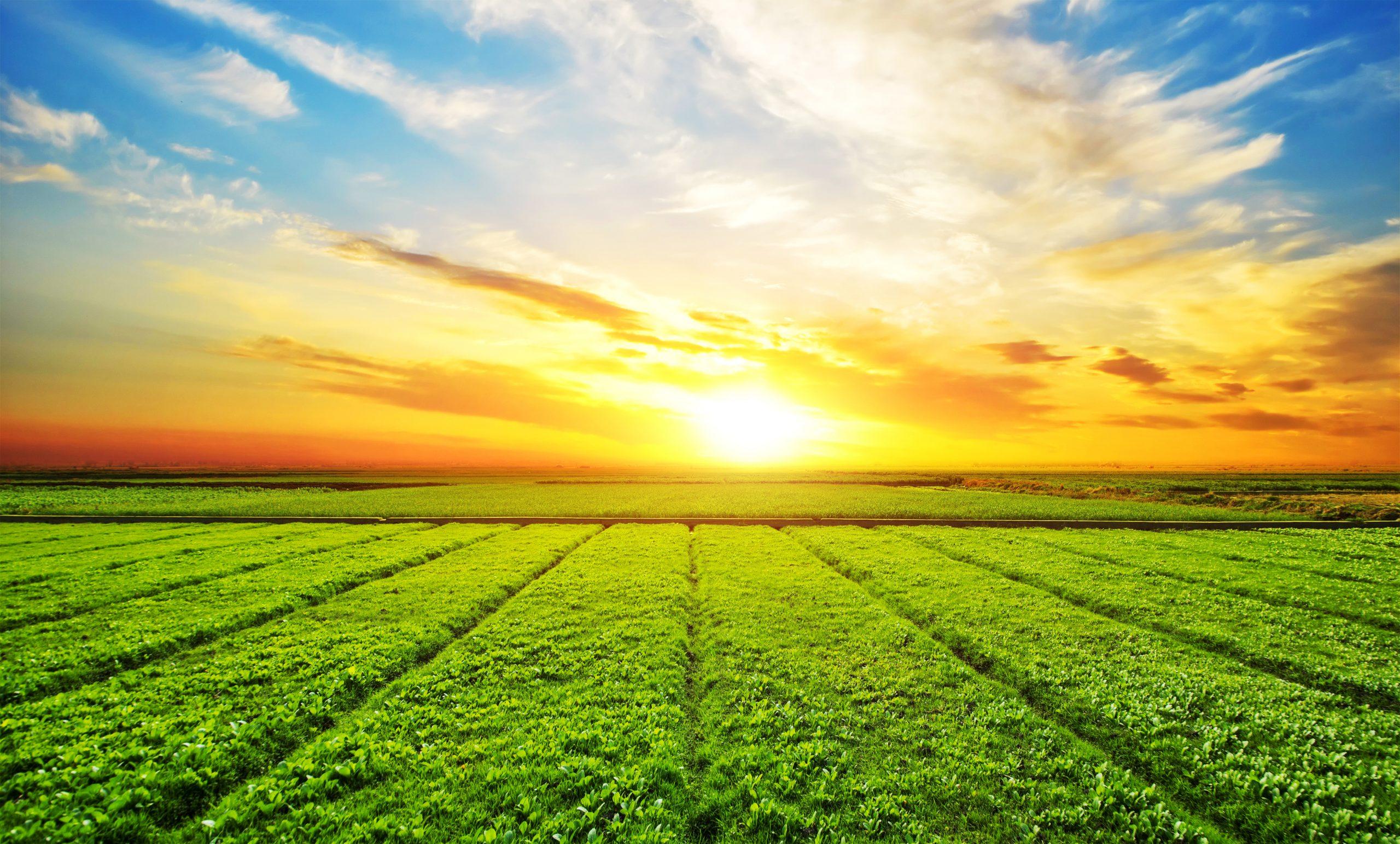 APIA lansează 3 scheme noi de sprijin pentru fermieri