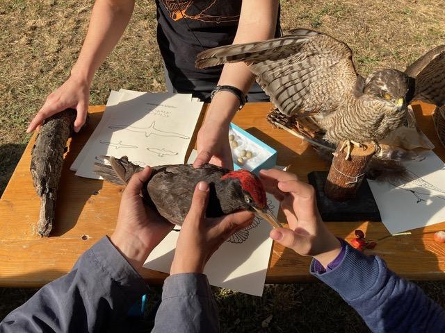 Lecții despre păsările din România pentru elevii cu deficiențe de vedere