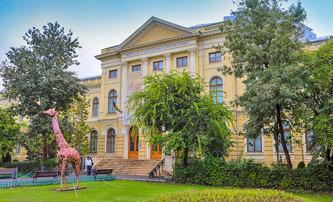 Muzeul Național de Istorie Naturală Grigore Antipa – ateliere online pentru copii