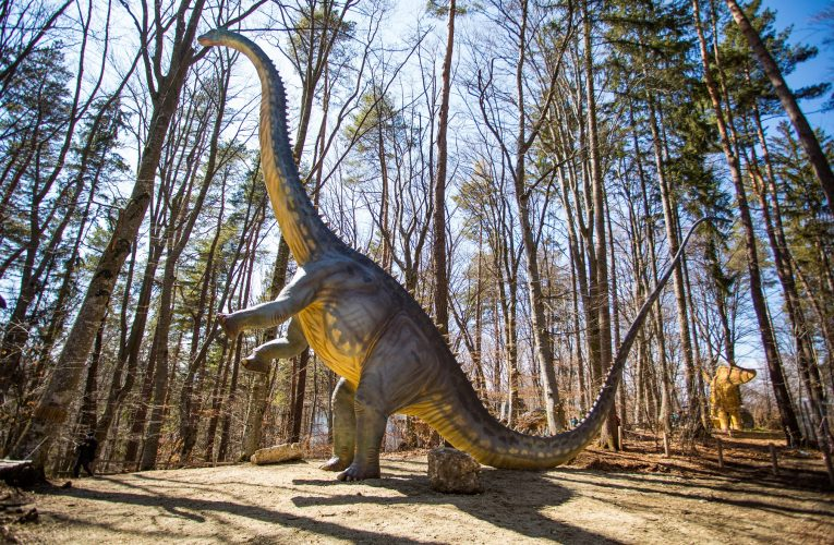 Vești bune din parcul dinozaurilor: începând cu această săptămână, la Dino Parc Râșnov este expus cel mai înalt dinozaur din Sud-Estul Europei